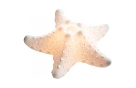 Starfish candelholder