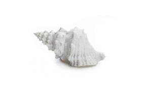 Shell resin
