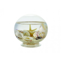 Ball sand & shells