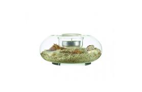Candleholder conchshell