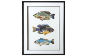 "Picture ""fishes"""
