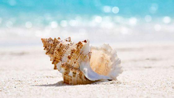 caracola de mar