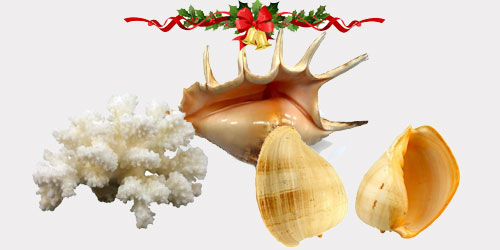 CONCH AND CORALS by christmas